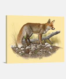 common fox