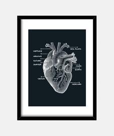 corazón del astro