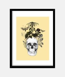 crâne avec des fleurs et des plantes