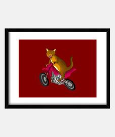 Cuadro con marco horizontal gatocross