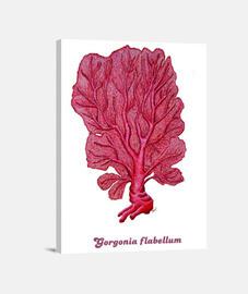 Cuadro Coral rojo Venus (Gorgonia flabellum)
