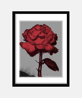 Cuadro de rosa trapper modelo rojo