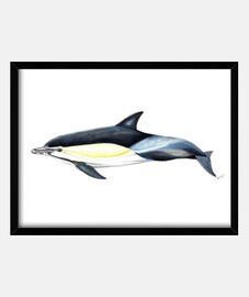 Cuadro Delfín común