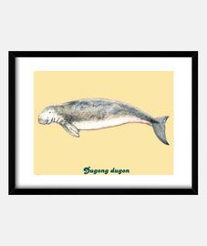 Cuadro Dugong (Dugong dugon)