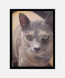 Cuadro gata gris seria