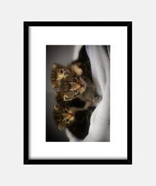 Cuatro gatitos traviesos