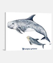 Delfín de Risso calderón gris lienzo