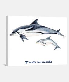 Delfín listado (Stenella coeruleoalba) lienzo