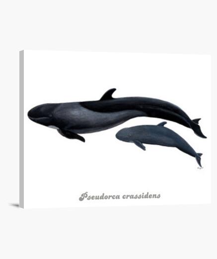 Falsa orca lienzo