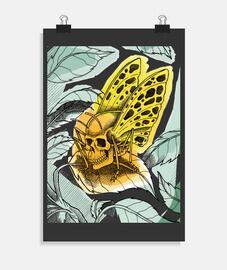 farfalla dlei morte