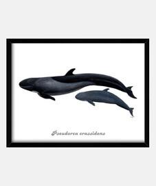 fausse image de orque