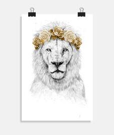 festival lion ii