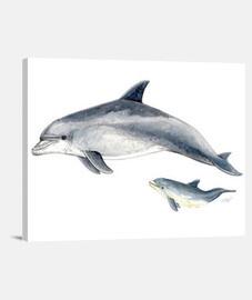 fin dolphin canvas