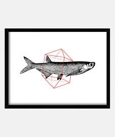fish dans géométriques ii