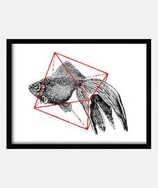 fish dans géométriques iii