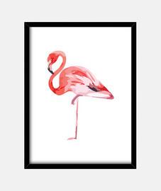 flamingo network