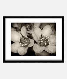 fleurs dans le 2 dark
