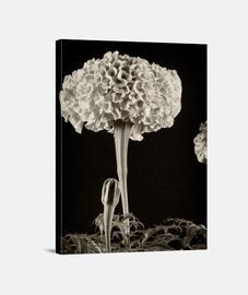 fleurs dans le noir 1