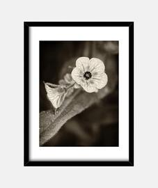 fleurs dans le noir 6