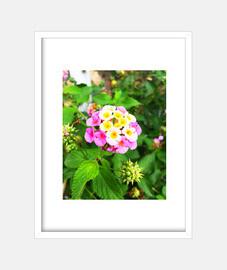 Flor - Cuadro con marco blanco vertical 3:4 (15 x 20 cm)