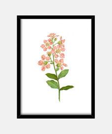 Flores Lagerstromia indica