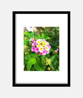 flower - frame with black vertical frame 3: 4 (15 x 20 cm)