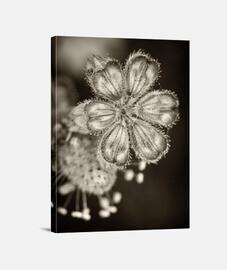 Flowers in the dark 4