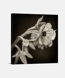 Flowers in the dark 5