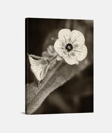 Flowers in the dark 6