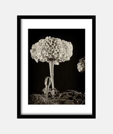 flowers nel dark 1