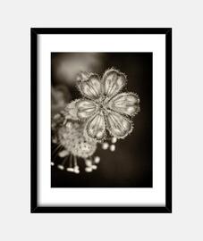 flowers nel dark 4