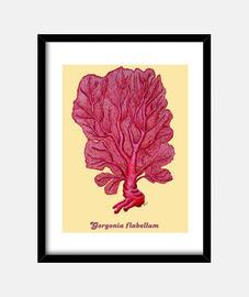 frame coral red venus (gorgonian flabellum)