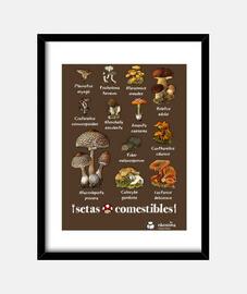 funghi commestibili (sfondi scuri)