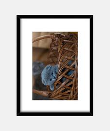Gatito asomándose por una cesta