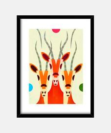 gazzella grafica