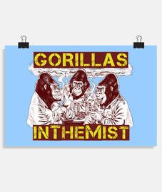 gorilla nlei nebbia