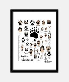 Huellas de mamíferos ibéricos n. común (