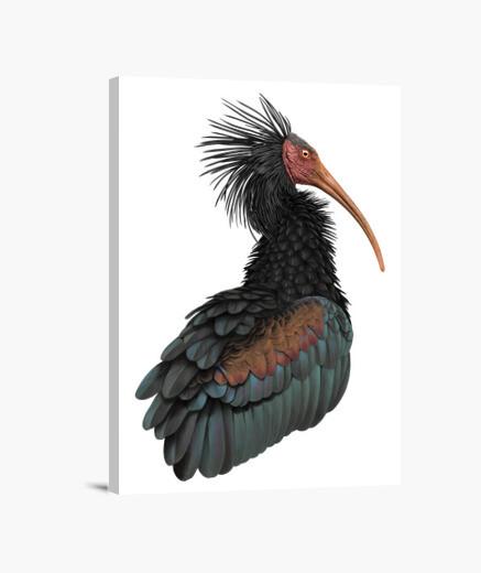 Lienzo Ibis eremita