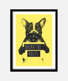 jaune rebelle chien