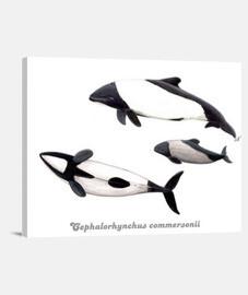 Lienzo Delfin de Commerson tonina overa