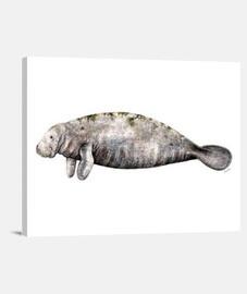 Lienzo Manati (Trichechus manatus)