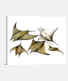 Lienzo Manta raya (Mobula tarapacana)