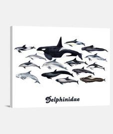 Lienzo Orcas, delfines y blackfish