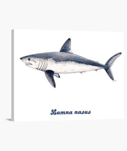 Lienzo Tiburón cailón (Lamna nasus)