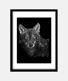 loup et loup