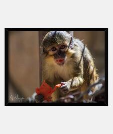 manger de singe