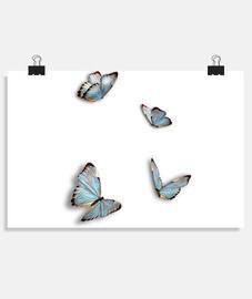 Mariposas celeste