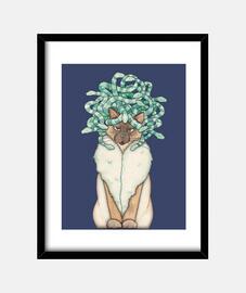 meduse gatto