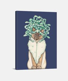 méduses chat