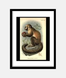 Monkey Vintage Print